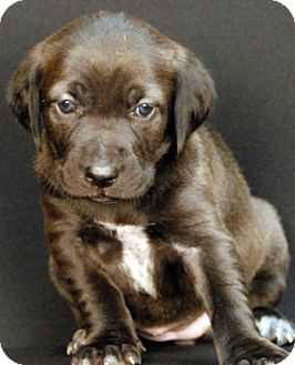 Hound (Unknown Type) Mix Puppy for adoption in Newland, North Carolina - Almora
