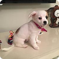 Adopt A Pet :: Princess Cinderella - Royal Palm Beach, FL