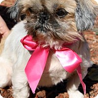 Adopt A Pet :: Jubilee - Norman, OK