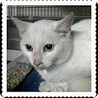 Adopt A Pet :: Ziggy - Trevose, PA