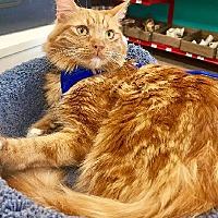 Adopt A Pet :: Rosa - Burbank, CA