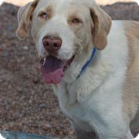 Adopt A Pet :: Buddy Pine Tree - Hooksett, NH