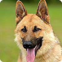 Adopt A Pet :: Nero - Dacula, GA