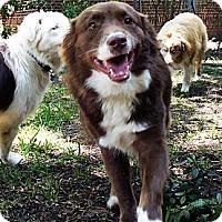 Adopt A Pet :: Ruger - Savannah, GA