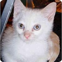 Adopt A Pet :: Mochi - Davis, CA