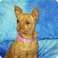 Adopt A Pet :: Gizzie - Ft. Myers, FL
