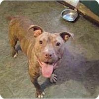 Adopt A Pet :: MINI MOO - Raymond, NH