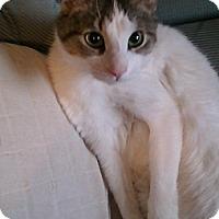 Adopt A Pet :: Lucky - Springfield, PA