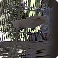Adopt A Pet :: George - Punta Gorda, FL