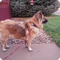 Adopt A Pet :: Referral - Tanya - Denver, CO