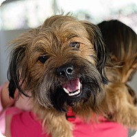 Adopt A Pet :: Ahi - Mission Viejo, CA