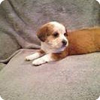 Adopt A Pet :: Paige - Marlton, NJ