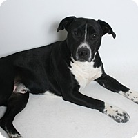 Adopt A Pet :: Bruce - Redding, CA