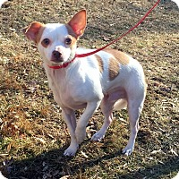 Adopt A Pet :: Chiclets - Bloomfield, CT
