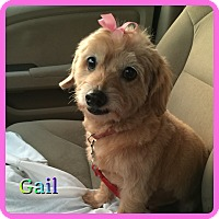 Adopt A Pet :: Gail - Hollywood, FL