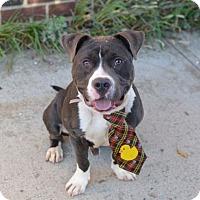 Adopt A Pet :: BRODY - Ridgewood, NJ