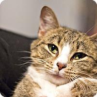 Adopt A Pet :: Raja - Lincoln, NE