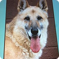 Adopt A Pet :: TOM VON THEOBOLD - Los Angeles, CA