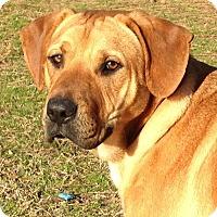 Adopt A Pet :: Jock - E. Greenwhich, RI