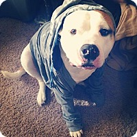 Adopt A Pet :: Roxy - Alexandria, KY