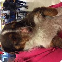Adopt A Pet :: Chula - Fresno, CA