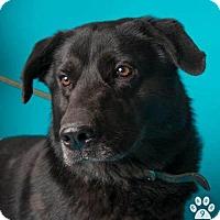 Adopt A Pet :: Blackie - see video! - Los Angeles, CA