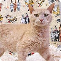 Adopt A Pet :: CATARINA - New Cumberland, WV