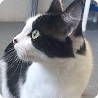 Adopt A Pet :: Maisy - Oakland, CA