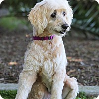 Adopt A Pet :: Maggie - SAN PEDRO, CA