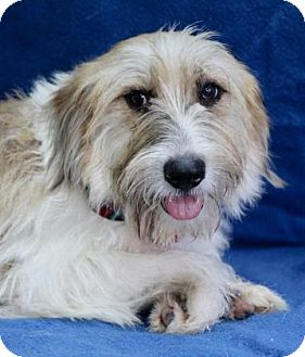 Terrier (Unknown Type, Small) Mix Dog for adoption in Picayune, Mississippi - Mike