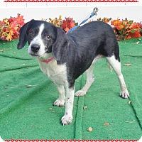 Adopt A Pet :: ROSIE - Marietta, GA