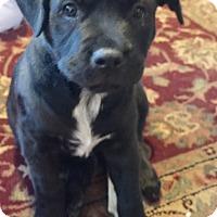 Adopt A Pet :: Aspen - Houston, TX
