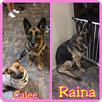 Adopt A Pet :: Raina - Mesa, AZ