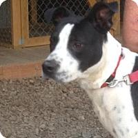 Adopt A Pet :: Colfax - Westwood, NJ