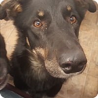 Adopt A Pet :: Bubba - Douglas, WY