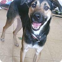 Adopt A Pet :: Floyd - Phoenix, AZ