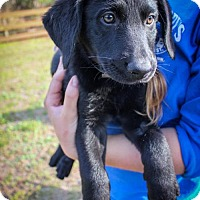 Adopt A Pet :: Itzhak - Jupiter, FL