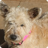 Adopt A Pet :: Dixie Belle - Bedminster, NJ