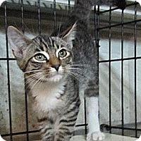 Adopt A Pet :: Baloo - Seminole, FL