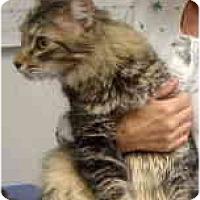 Adopt A Pet :: Phoenix - Mesa, AZ