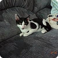 Adopt A Pet :: Oliver - Saint Albans, WV