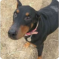 Adopt A Pet :: Delta--adopted!! - New Richmond, OH