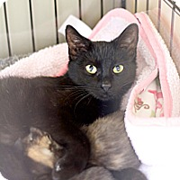 Adopt A Pet :: Kris and her babies - Island Park, NY