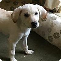 Adopt A Pet :: Miranda - Austin, TX