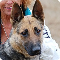 Adopt A Pet :: Heidi - Preston, CT