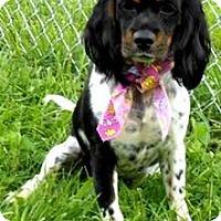 Adopt A Pet :: I'M ADOPTED Chloe Bateman - Oswego, IL