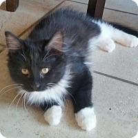 Adopt A Pet :: NJ - Scarlett - Blairstown, NJ