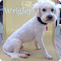Adopt A Pet :: Bordentown NJ - Wrigley - New Jersey, NJ