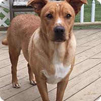 Adopt A Pet :: Ryder - Hatifeld, PA