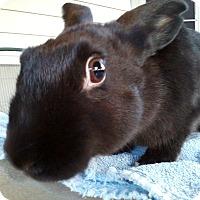 Adopt A Pet :: Gypsy - Watauga, TX